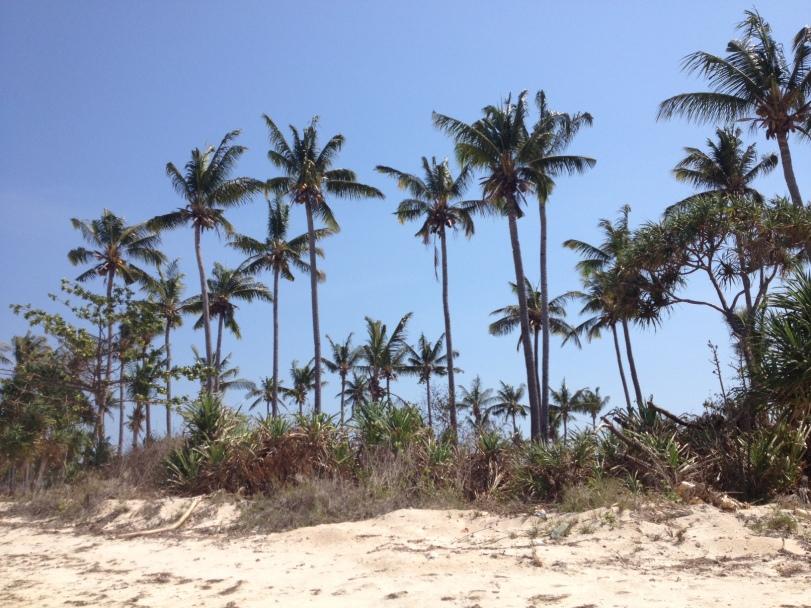 Jadi ingat lagu Rayuan Pulau Kelapa, disini daunnya seolah-olah merayu kami untuk tinggal *lebay yak