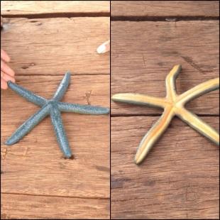 Bindung laut hasil temuan anak-anak setempat